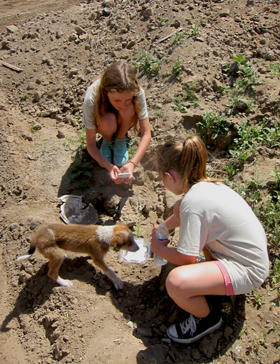 Rescuing animals on mission trips to Mexico